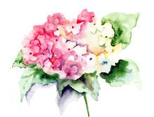 Beautiful Hydrangea Pink Flowers
