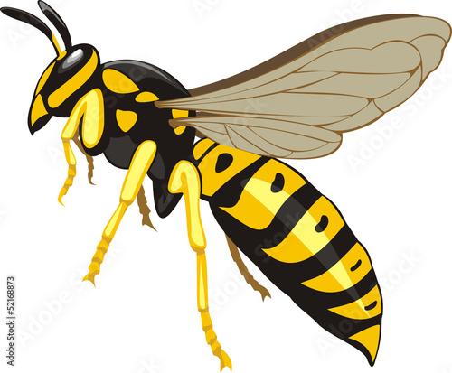 Valokuva  wasp