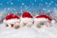 Little Cats Wearing Santa's Hat Sleeping