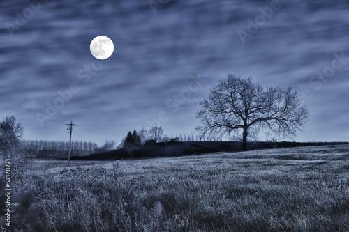 Fotobehang Volle maan Night scene