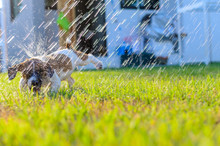 Puppy Playing With Water On Th...