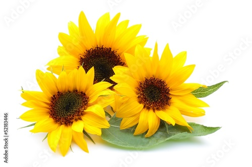 Keuken foto achterwand Zonnebloem ヒマワリの花