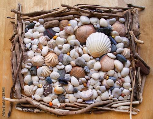 Sea shells Seashells! - with driftwood & pebbles from beach.