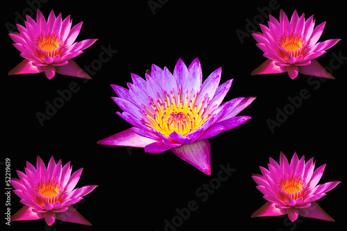 Pink Lotus Flower On A Black Background Buy This Stock Photo And
