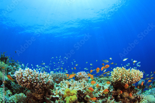 In de dag Koraalriffen Underwater Coral Reef and Tropical Fish