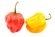Scotch Bonnet Peppers (chili)