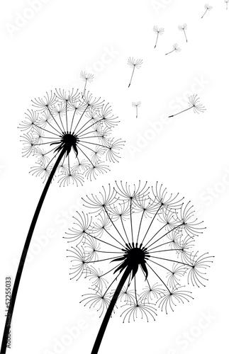 Fotografie, Obraz  vector dandelion