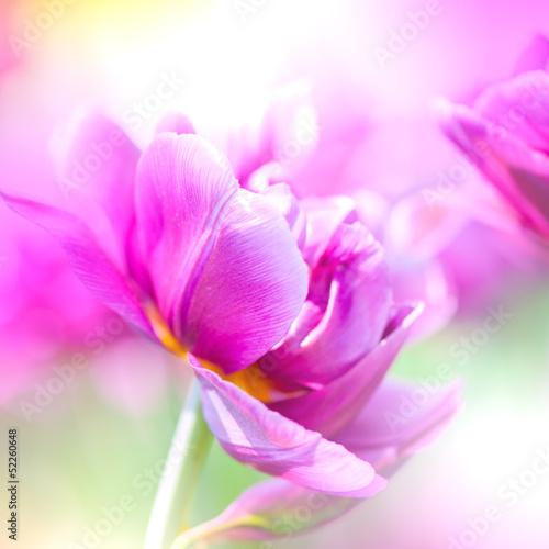 defocus-piekne-fioletowe-kwiaty