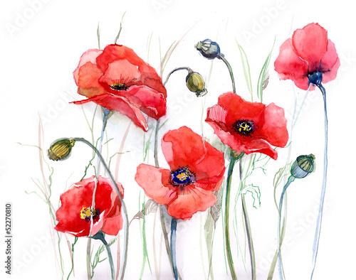 Foto auf Leinwand Gemälde poppy