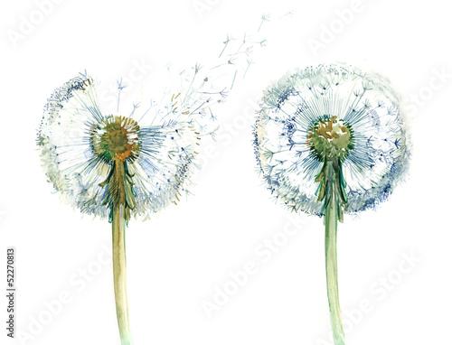 couple od dandelions