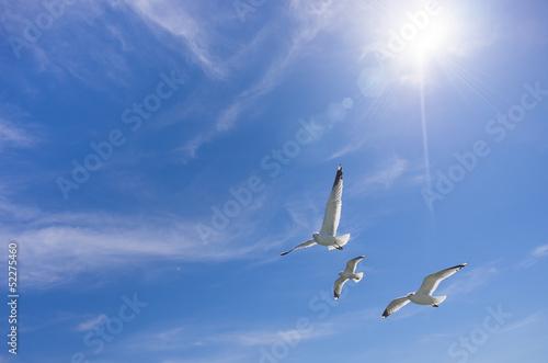 Staande foto Vogel 羽ばたくカモメの群れ
