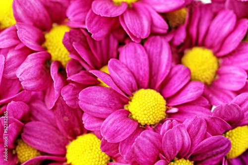 Cadres-photo bureau Macro Beautiful violet red dahlia flowers.Сloseup