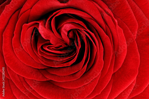 Spoed Foto op Canvas Macro Beautiful red rose flower. Closeup.