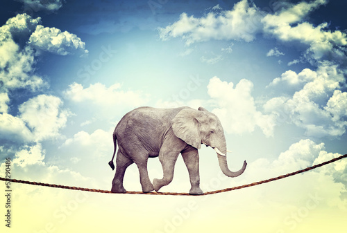 Foto op Aluminium Olifant elephant on rope