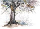 old tree - 52298821