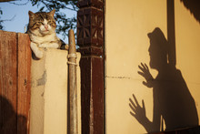 Cat On Fence With Shadow Of A Man Scarring It