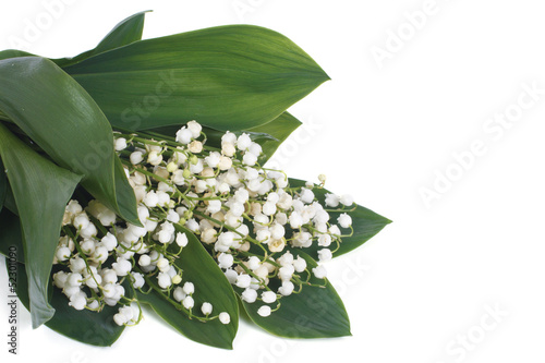 Wall Murals White lilies of the valley with green leaves isolated