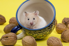 Hamster In A Colorful Old Mug ...