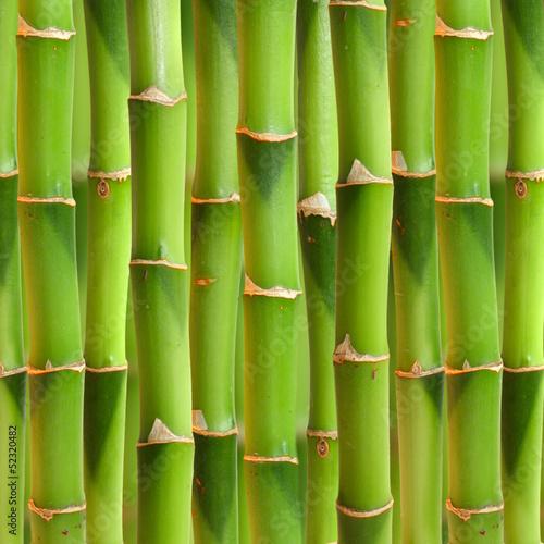 tlo-bambusowe-lodygi