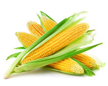 An Ear Of Corn Isolated On A W...
