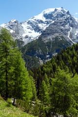 Fototapeta Góry Summer Stelvio Pass (Italy)
