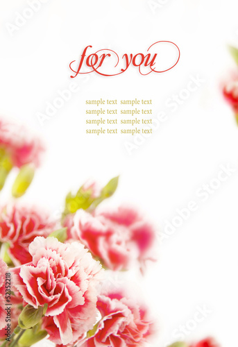 Pink flowers, bouquet of carnations on white background. Canvas Print