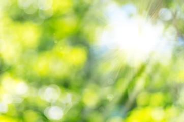 Nature Glow_Bokeh and sun...