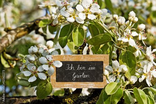 Schild Zwischen Kirschblüten Ich Bin Im Garten Kaufen Sie Dieses