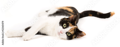 Fotografie, Obraz  Young cat lying on the ground, isolated in white