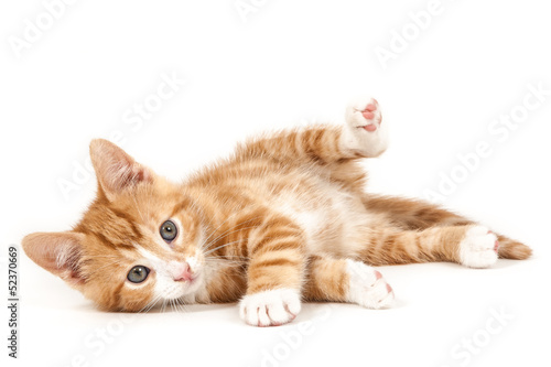 Little red kitten, lying on the ground.