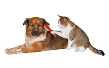 Cat Brushing A Blissful Dog