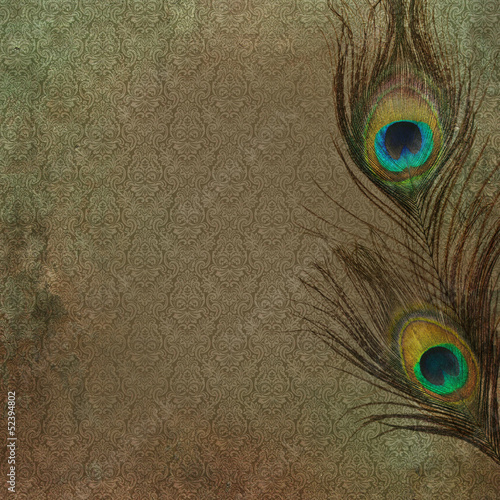Valokuva  Vintage grunge background with peacock feather