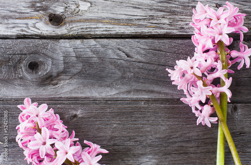 Poster de jardin Dahlia beautiful spring flowers on wooden background