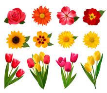Set Of Beautiful Flowers. Vector Illustration