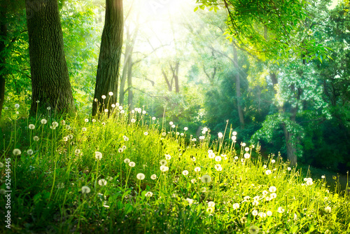 Fotobehang Lente Spring Nature. Beautiful Landscape. Green Grass and Trees