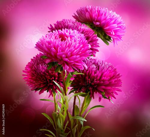 aster-flowers-bouquet-art-design