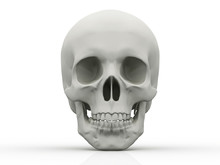3d Human Skull Isolated On White Background
