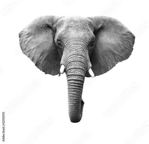 Elephant Isolated Wallpaper Mural