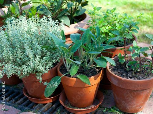 Fototapeta pots with herbs obraz na płótnie