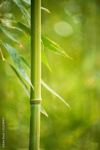 zakonczenie-bambusowa-roslina