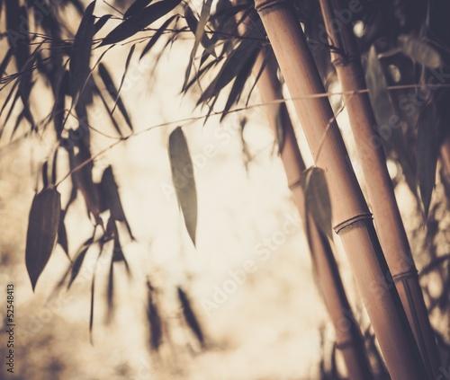 stonowany-obrazek-bambusowa-roslina
