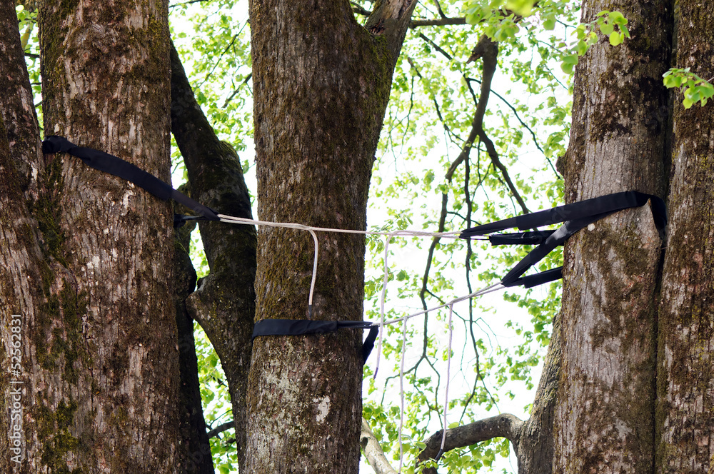 Professional tree cabling and bracing