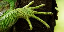 Green Iguana Feet