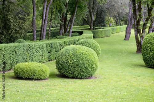 Fotografie, Obraz  Arbuste décoratif