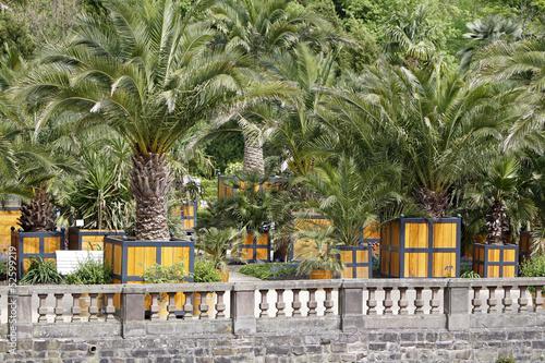 Fotobehang Zuid-Amerika land Palmengarten Bad Pyrmont