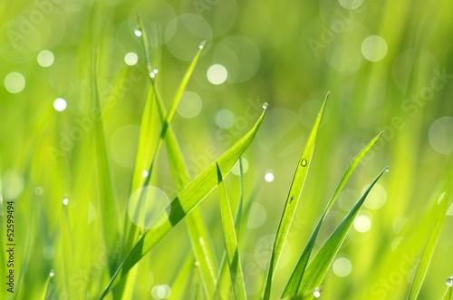 swieza-zielona-trawa-z-kropli-wody-z-bliska