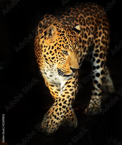Obrazy na płótnie Canvas Leopard portrait