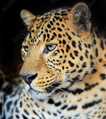 Deurstickers Luipaard Leopard portrait