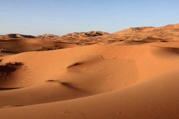 Fototapeta na wymiar Sand dunes and cloudless sky in Merzouga,Morocco