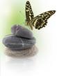 papillon sur galets zen